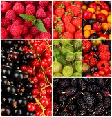 Collage of berries close-up