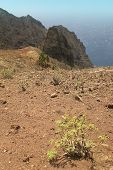 Gomera Landscape With Rocks And Plants. Canary Islands