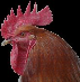 head of the rooster - mosaic