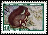 Vintage  Postage Stamp. Protein.