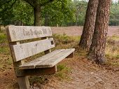 Lonely Bench In Dutch Heathland
