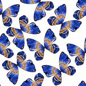 Seamless Pattern Background With Bright Blue Colored Decorative Hand - Drawn Butterflies Isolated On
