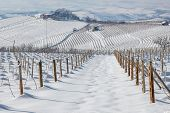 Vineyards on the hills of Langhe covered with snow in Piedmont, Northern Italy.