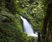 waterfall in rain forest on slopes of Mt Kenya