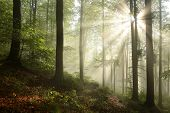 Autumn deciduous forest at dawn