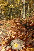 Forest Path In Automn