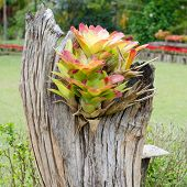 picture of bromeliad  - bromeliad growing on stump in flower garden - JPG