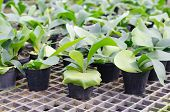 image of epiphyte  - Staghorn fern seedling in pot at flower market - JPG