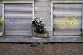 stock photo of porphyry  - Two closed shop windows with a flowers pot - JPG