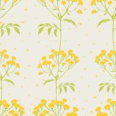 image of tansy  - Beautiful vector pattern with nice tansy flowers - JPG