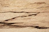 picture of dead-line  - Spalted maple texture - JPG