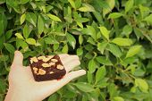 pic of brownie  - Brownie in hand on a background of green leaves - JPG