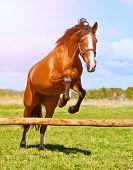image of bay horse  - Bay horse jumping over a hurdle riderless - JPG