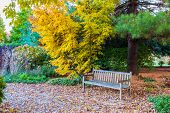 foto of bench  - Bench in Fall season park near japanese maple tree. Autumn landscape.
