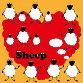 pic of baby sheep  - Vector drawing different sheeps on blank background - JPG