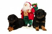 Sleepy Puppy Dogs With Santa