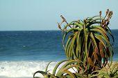 Aloe Plant #4