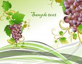 Blue grape cluster with leaves. vector