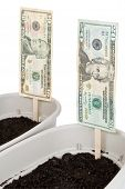 Planting Money For A Better Future