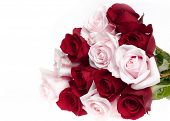 pink and red roses bundle