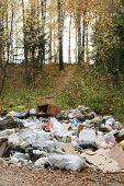 rubbish heap in autumn forest