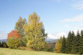 autumn trees at mountains by name Jesenik at Czech republic