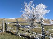 A Touch Of Rime Ice