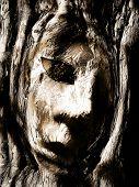 face in tree illustration