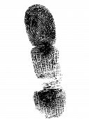 Full Fingerprint 4