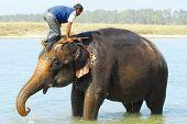 montando um elefante (série: parte 5 de 5)