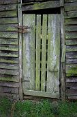 The Moss-Covered Door