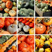 Background filled with a collection and collage of halloween pumpkins in all kind of colors and shap
