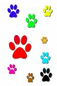 color dog prints
