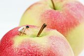 Macro Of A Curious Miniature Woman On An Apple poster