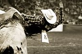 image of bull-riding  - a bull rider  - JPG
