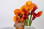 Orange Calla Lilies (zantedeschia) With Orange Marmalade