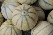 stock photo of muskmelon  - a stall of muskmelons on the market - JPG