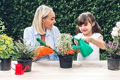 Mother With Little Daughter Having Fun And Planting Flowers In Pot With Soil Together,daughter Takin poster
