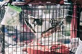Sad Homeless Alone Cat From A Shelter For Animals Looking Out From Cage Behind Bars And Waiting Owne poster