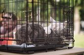 Sleeping Homeless Cats From Shelter For Animals In Cage At Special Charity Exhibition, Expecting The poster
