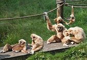 Joyful Monkey Family