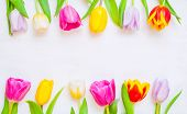 Lovely Spring Tulip Flowers On Wooden Backdrop, Spring Holiday Postcard. Spring Flower Background Wi poster