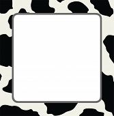 image of cow  - vector frame with abstract cow skin texture and copy - JPG