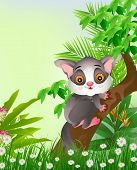 squirrels on tree with tropical forest background