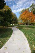 Sidewalk Through October Forest