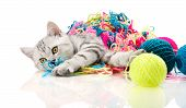 picture of racy  - the grey beautiful little kitten with many multi - JPG
