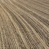 Furrows on a freshly plowed field in early spring
