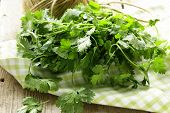 stock photo of leafy  - bunch of fresh green coriander  - JPG