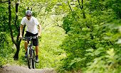 pic of biker  - Cyclist Riding the Bike on the Trail in the Beautiful Summer Forest - JPG