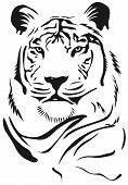 picture of tiger eye  - animal art background graphic tiger vector illustration - JPG